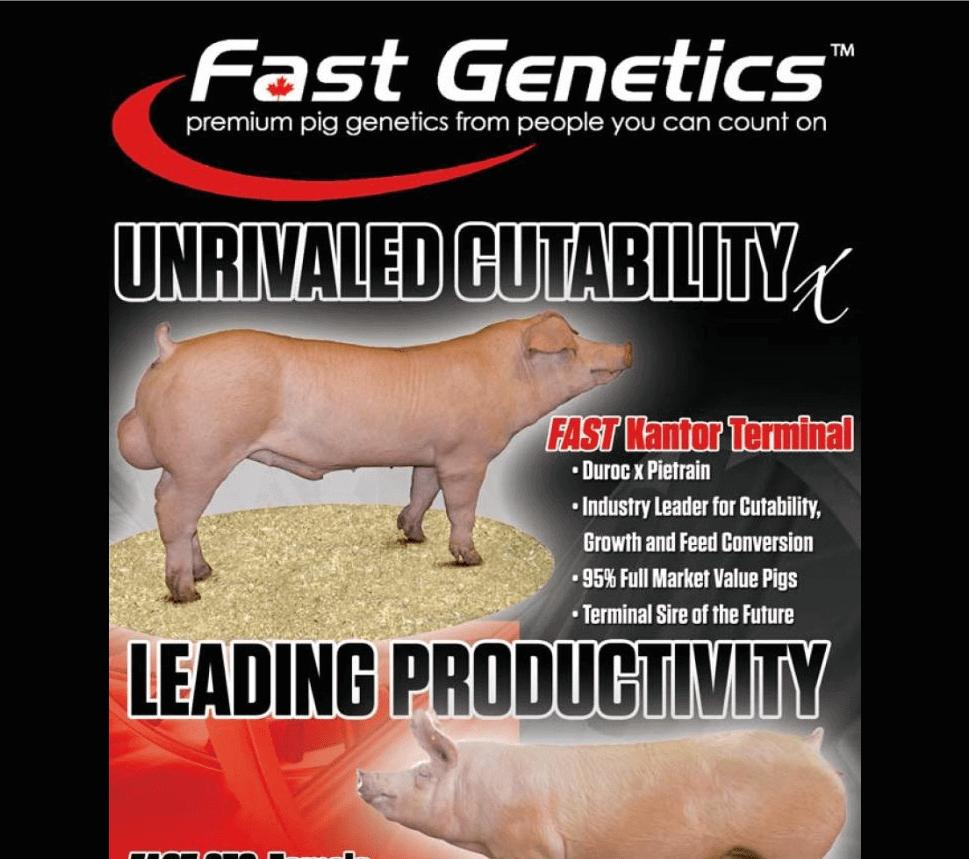 Fast Genetics USA - Ranch House Designs, Inc. on pig pool, pig bathroom, bird cage design, crate design, barn design, pig cooking, pig drawing, pig home, pig floor, bbq smoker design, silo design, pig door, pig sofa, pig painting, pig lamps, pig fabric, pig shelter, poultry farm design, pig accessories, pig food,